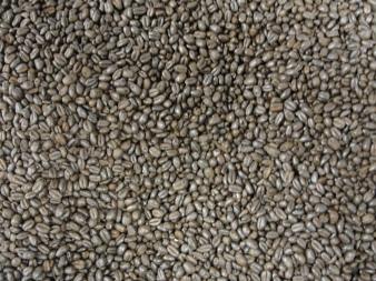 Midnight Wheat